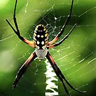 The Writing Spider & His Web by Kathy Baccari