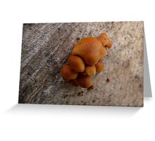 Tiny Wonders Greeting Card