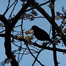 Early bird by Themis