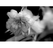 Rose of Maclean Photographic Print