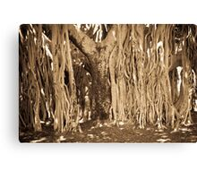 Roots and All Canvas Print