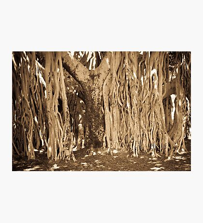 Roots and All Photographic Print