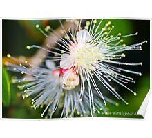 Wattle It Be Poster