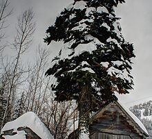 Snowed In by Dale Lockwood