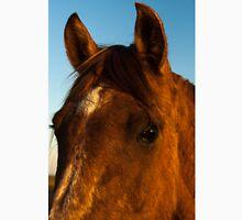 Portrait of Horse Head in Morning Light Unisex T-Shirt