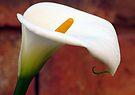 Flowering by Elizabeth Kendall