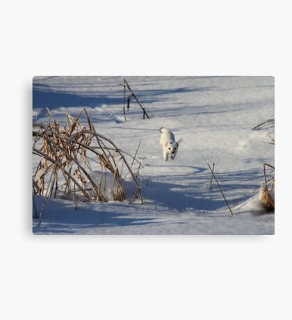 Who Needs Wings? / Short Tailed Weasel Canvas Print
