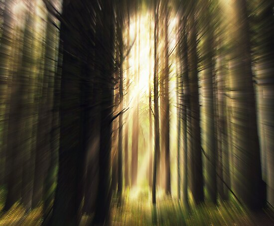 RUN... Don't Look Back.....forest, Yachats, Oregon by Diane Arndt