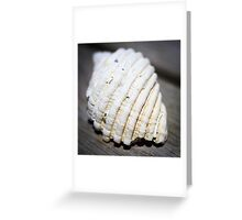 she sells - sea shells iv Greeting Card