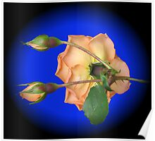 Orange Wildfire - Rose and Buds Poster
