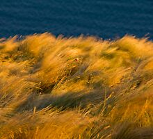 Coastal Breeze by trevallyphotos