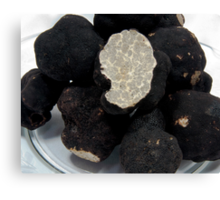 Oregon Black Truffles on white Canvas Print