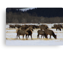 Master of the Herd Canvas Print