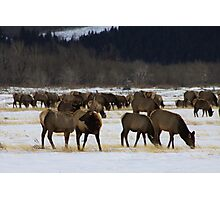 Master of the Herd Photographic Print