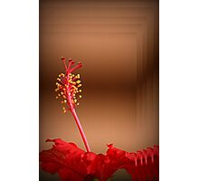 A Beautiful Hibiscus Photographic Print