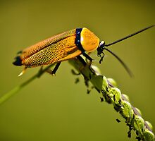Little Bug by Tracie Louise