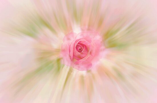 ROSES ARE RED...NOT THIS ONE by Sherri Palm Springs  Nicholas