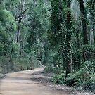 Dirt Road Through Bodalla State Forest, NSW by aussiebushstick