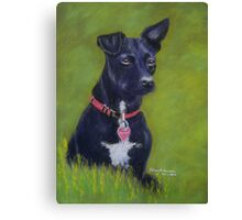 Tarn, the Patterdale Terrier Canvas Print