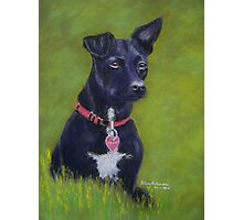 Tarn, the Patterdale Terrier Photographic Print