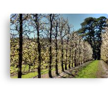 Fruit Trees in Perth Hills Canvas Print