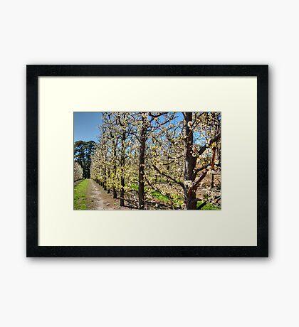 Fruit Trees in Perth Hills # 2 Framed Print