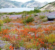 Wildflowers and Spirit Lake by YogiColleen