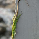 Lizards in my garden - TN by JeffeeArt4u