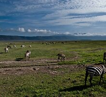 Zebras of the Ngorongoro crater by JLCampbell