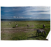 Zebras of the Ngorongoro crater Poster