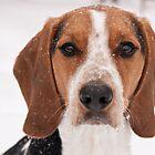 Winter Hound by Darren Boucher