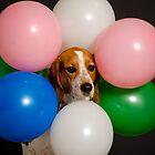 Balloon animals by Darren Boucher