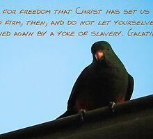 For Freedom We Have Been Set Free by Geoff Stone