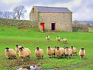 Sheep!!!!! - Wensleydale - HDR by Colin  Williams Photography