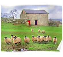 Sheep!!!!! - Wensleydale - HDR Poster