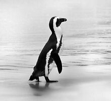 Penguin in black and white by Anna Phillips