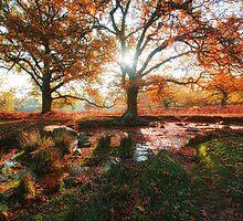 Last days of autumn 2 by MartinMuir