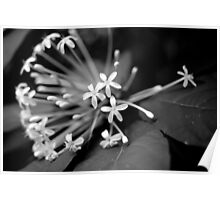 Little White Flowers. Stunning B&W Photo Poster