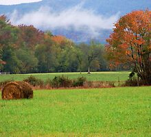 Autumn Harvest by Carolyn Wright
