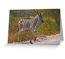 Zebra foal Greeting Card