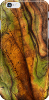 Fall Leaf Abstract by Carla Jensen