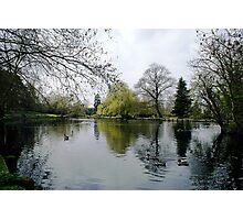 Beddington Park Photographic Print