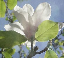 Magnolia by Circe Lucas