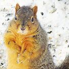 One Happy Squirrel by lorilee