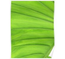 Huge Green Leaf Poster