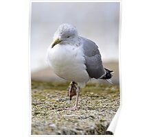 Poorly Gull Poster