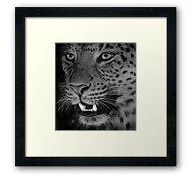 Leopard BW Framed Print