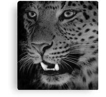 Leopard BW Canvas Print
