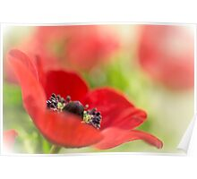 Gorgeous Anemone... Poster