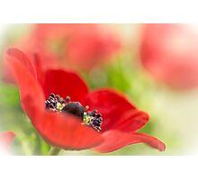 Gorgeous Anemone... Photographic Print